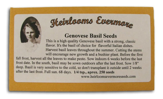 Heirlooms Evermore Genovese Basil Seeds - 1/4 tsp.