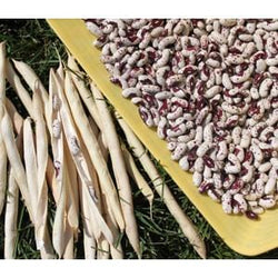 Azure Husbandry Jacob's Cattle Bean Seed, Organic - 1 oz