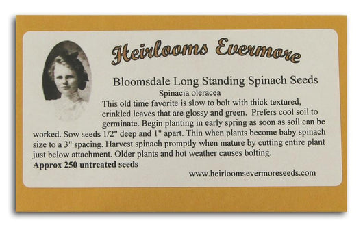 Heirlooms Evermore Bloomsdale Long Standing Spinach Seeds - 250 seeds