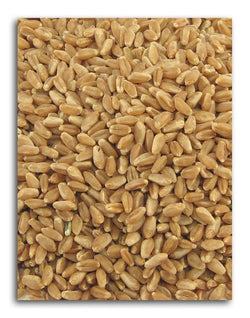 Azure Farm Wheat Hard Red Organic - 25 lbs.