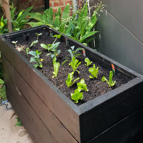 black planter box