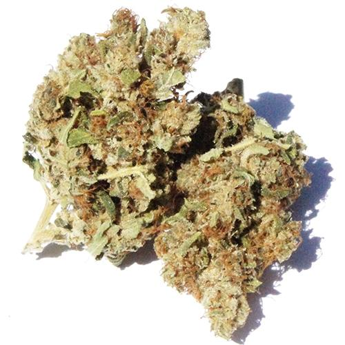 Bonnie & Clyde - White Widow - CBD Hemp - Buy cannabis online in CBD shop - uWeed Switzerland