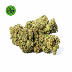 Cheesy Passion-CBD Cannabis-Green Passion-Swiss CBD Shop-uWeed