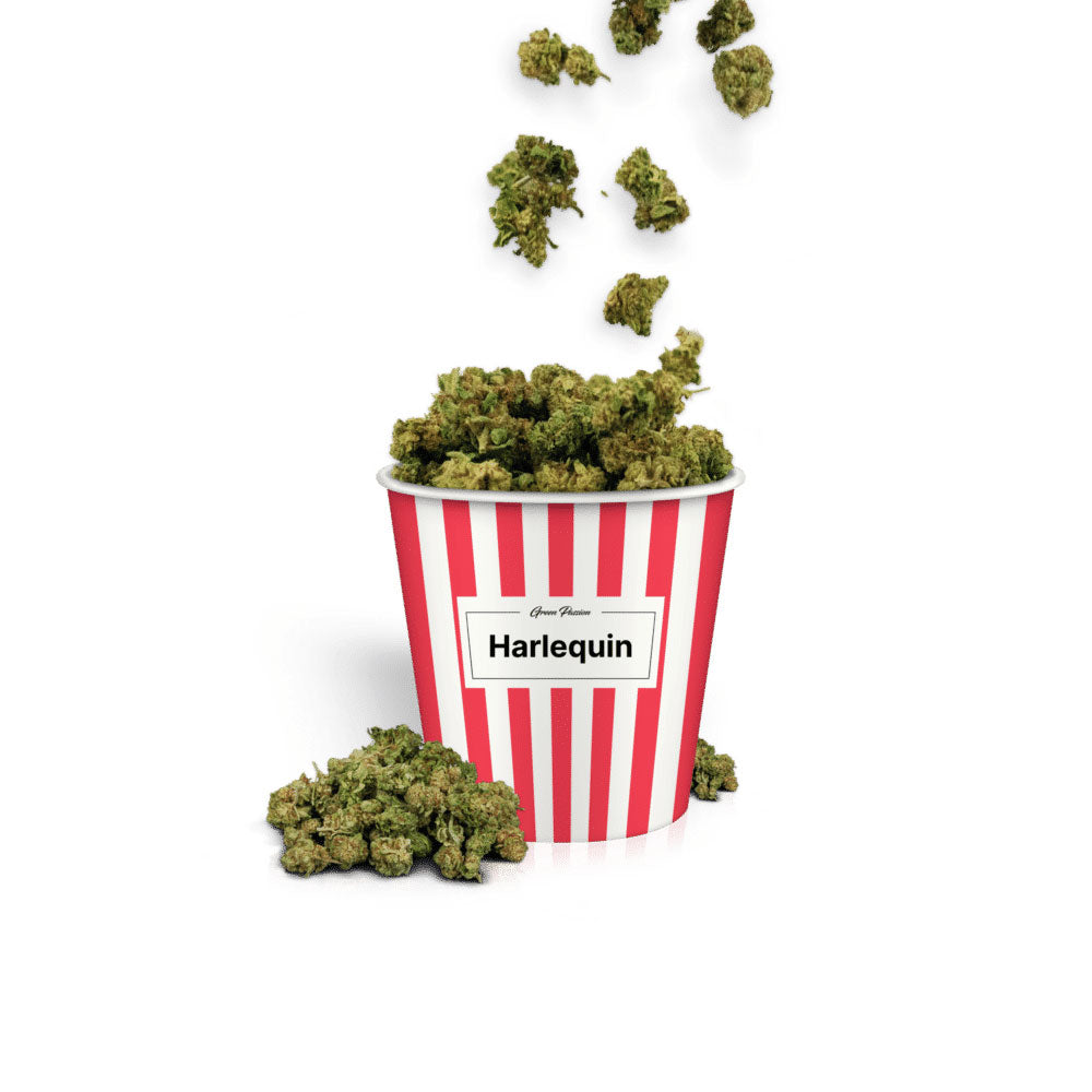 Harlequin Popcorn-CBD Cannabis-Green Passion-Swiss CBD Shop-uWeed