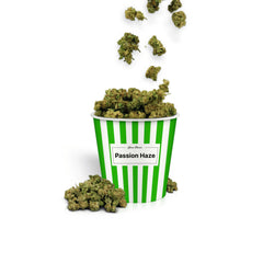 Passion Haze Popcorn-CBD Cannabis-Green Passion-Swiss CBD Shop-uWeed