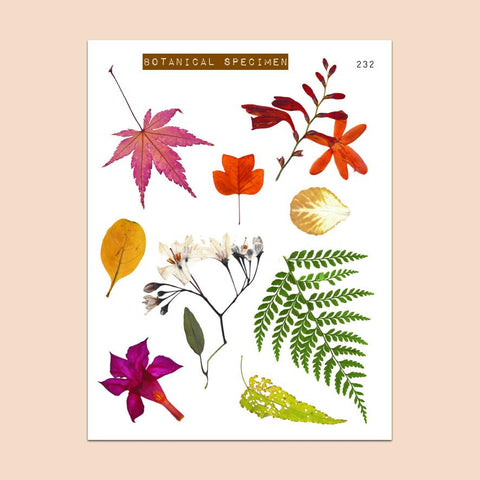 PAPERGEEK Cozy Fall - Clear Fall Leaves Stickers Botanical Specimen 232