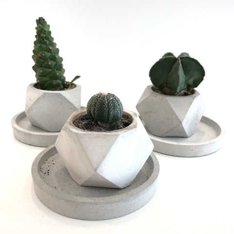 Geometric Planter With Plant: Grey