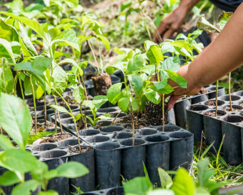 Trees planted IN GUATEMALA