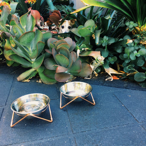 Buy Luxe Cat Small Dog Pet Bowls Rose Gold Copper Stands