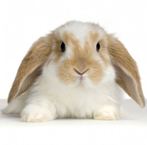 BEAUTY WITHOUT BUNNIES, Cruelty Free cosmetics