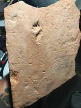 Quadruped mammal-like reptile trackway - Fossil Daddy