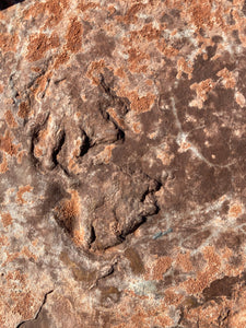 Fossil Amphibian Tracks from El Pueblo, New Mexico