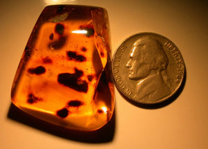 Superb & Rare Spider in Authentic Dominican Amber Fossil Gemstone Large 7.6g - Fossil Daddy