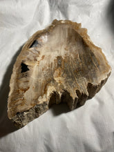 "Decorative ""Petrified"" Fossil Wood Bowl #2 - Fossil Daddy"