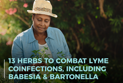 13 Herbs to Combat Lyme Coinfections, Including Babesia & Bartonella