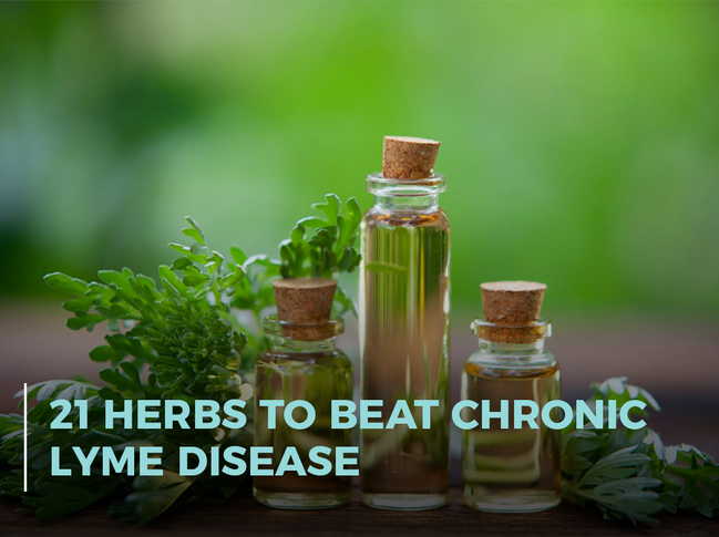 21 Herbs to Beat Chronic Lyme Disease