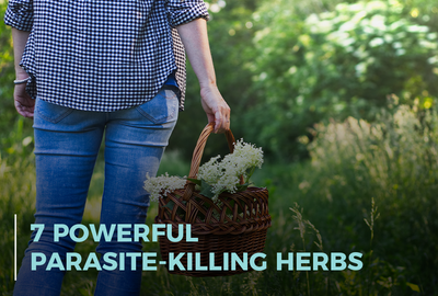 7 Powerful Parasite-Killing Herbs