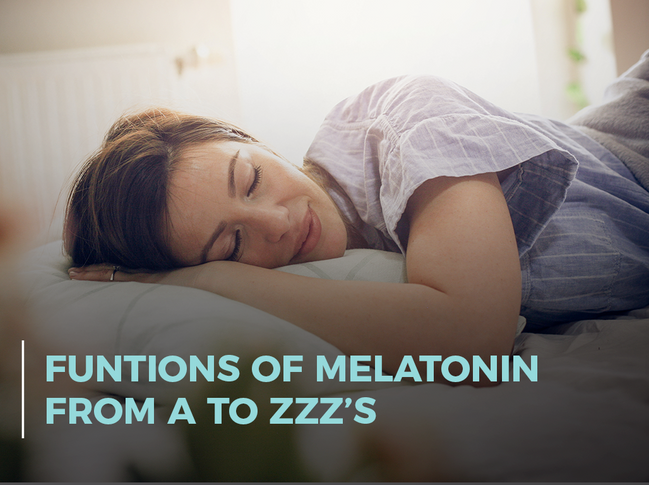 Functions of Melatonin from A to Zzzs