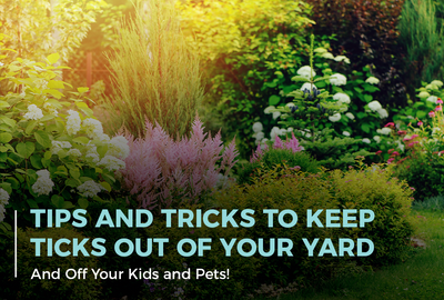 Tricks and Tips to Keep Ticks Out of Your Yard