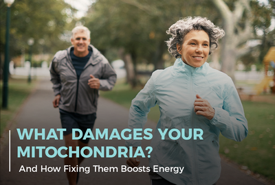 What Damages Your Mitochondria? (And How Fixing Them Boosts Energy)