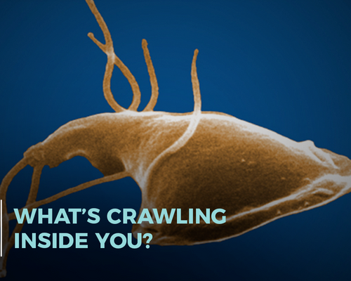 What's Crawling Inside You?