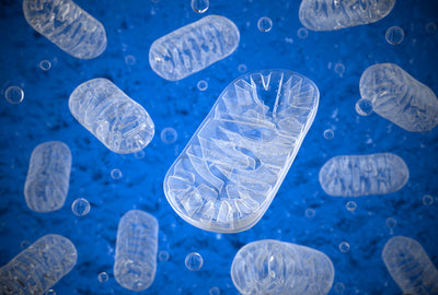 What Damages Your Mitochondria?