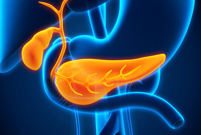 TUDCA Benefits If You Lack a Gallbladder