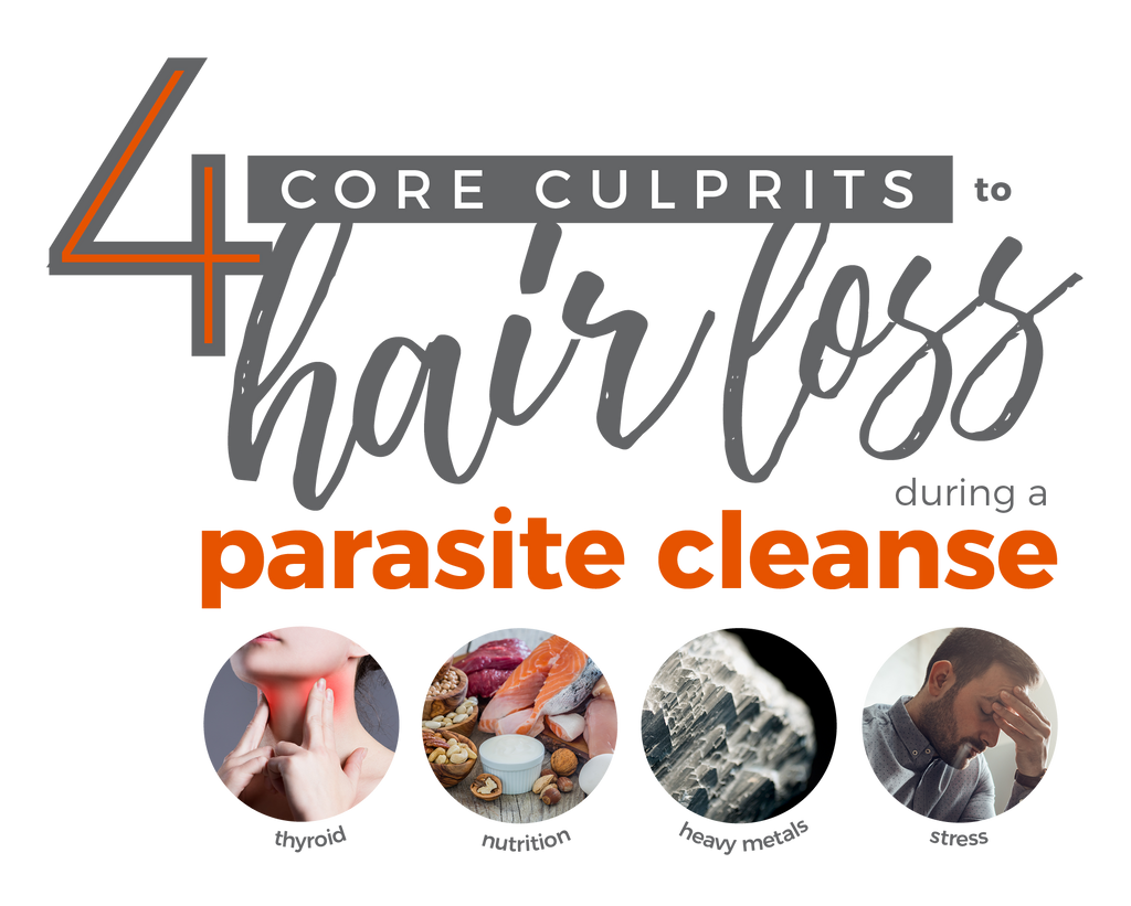 4 Core Culprits to Hair Loss during a Parasite Cleanse
