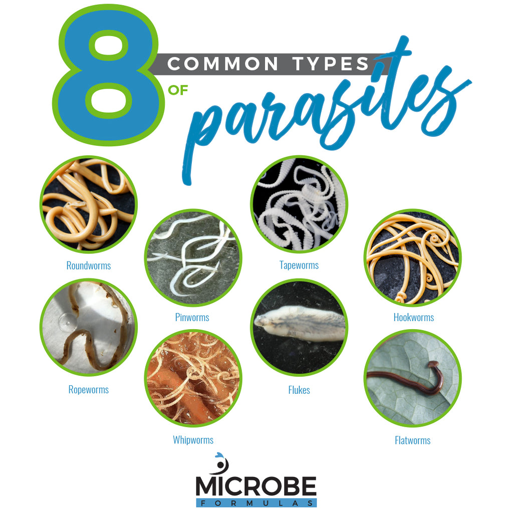 8 Common Types of Parasites