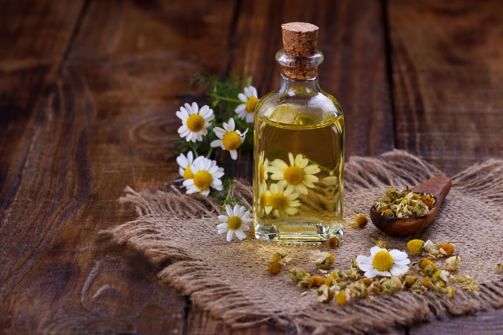 Chamomile oil for parasite detox