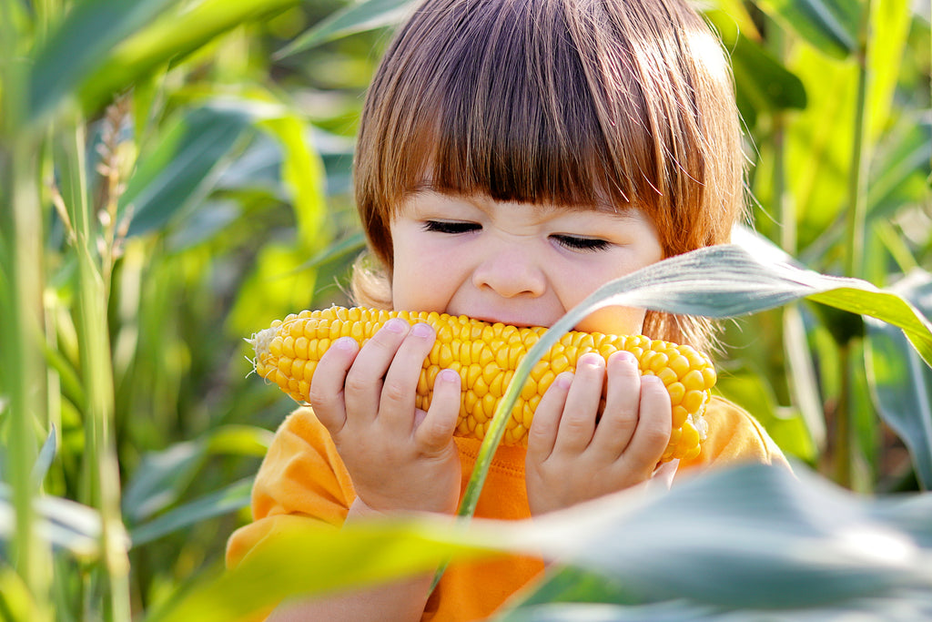 Yellow corn is a source of lutein and zeaxanthin
