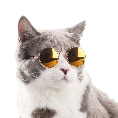 Super Cool Cats in Glasses