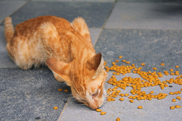 cat eating kibble