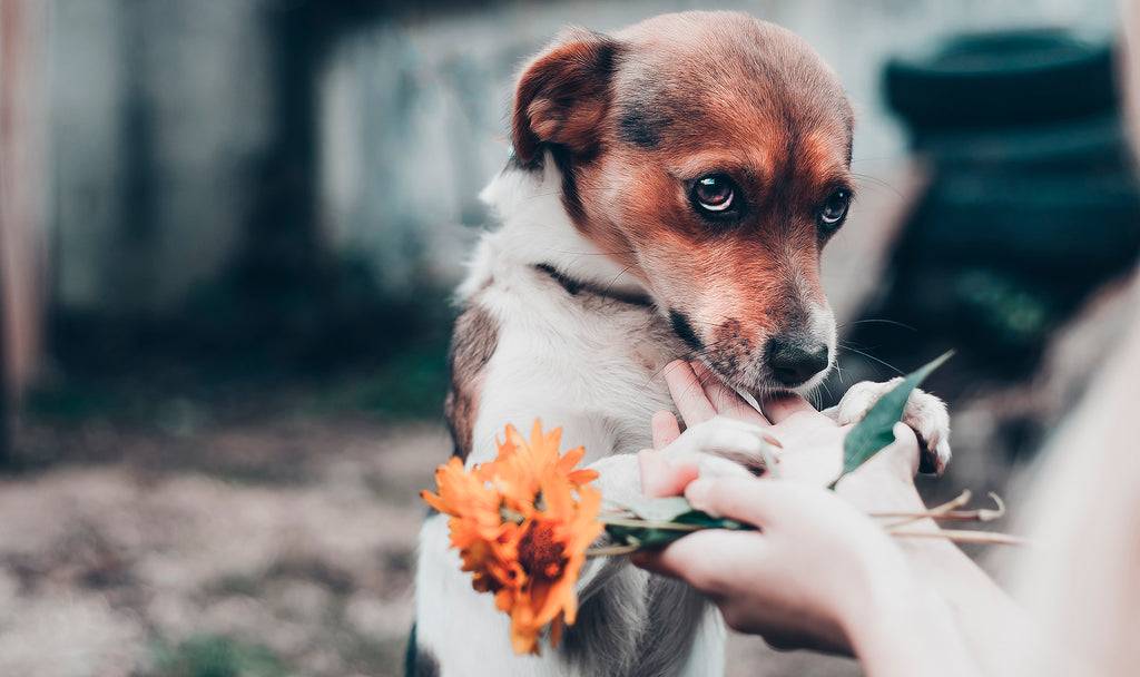 How to deal with separation anxiety in dogs. Img2.