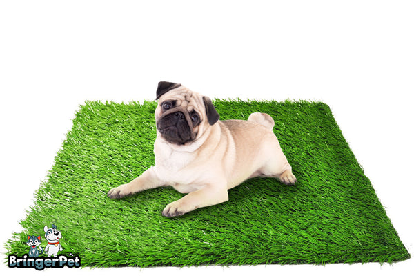 "Artificial Grass for Dogs and Puppies, 20"" x 25"", Best fake Grass in Potty Training 2020"