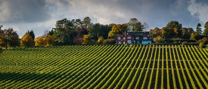 Producer Profile : Hambledon Vineyards
