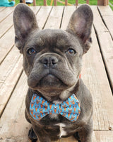 Choose-A-Fabric Bow Tie Collar Accessory - Fox Valley Dog Collars