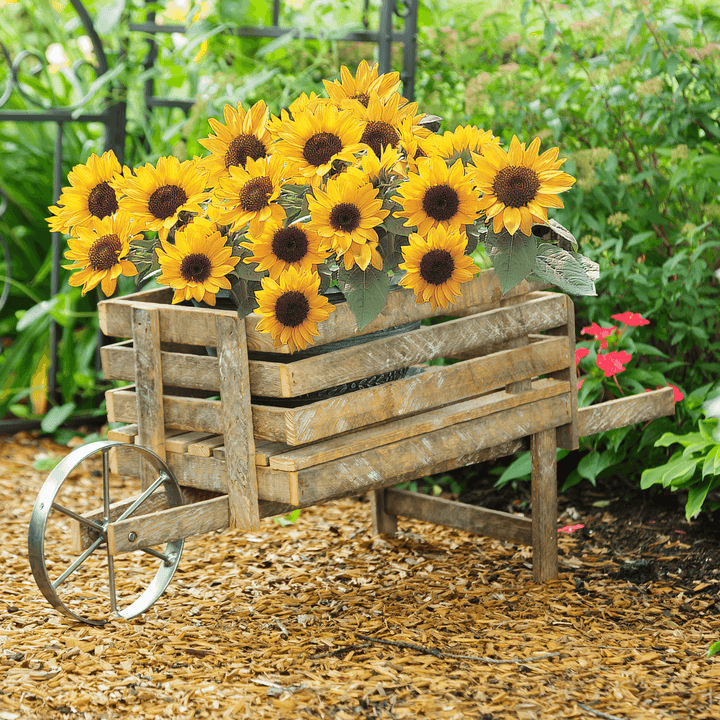 Bellflower Reclaimed Wood Wheelbarrow Planter - H&R Lifestyle