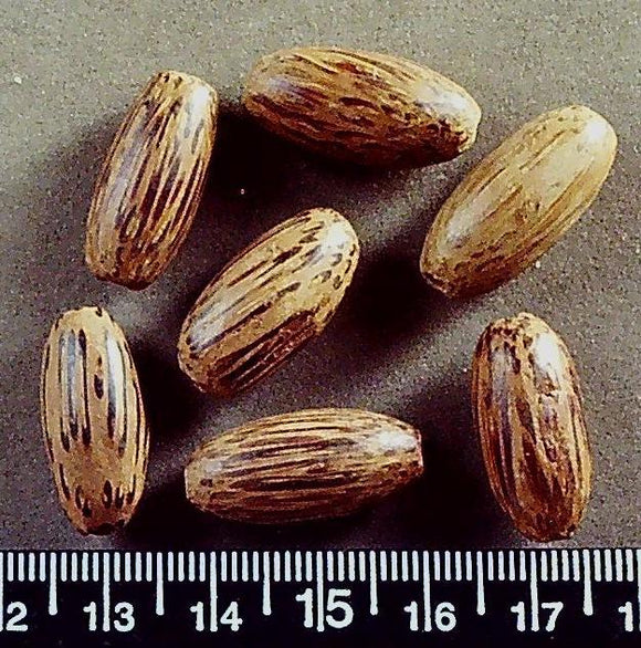 Wood oval beads (25mm x 10mm) 7 beads