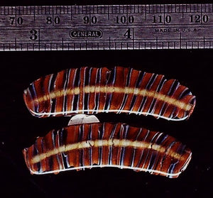 Handmade glass amber stripes flat bead pair  (1 pair)
