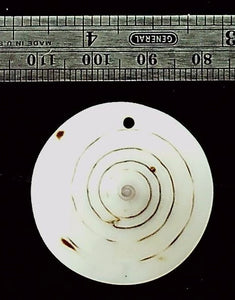 Shell focal bead pendant  (1 )
