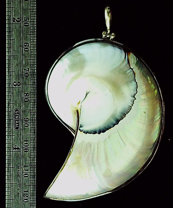 Shell sterling silver edged focal pendant  (1 )