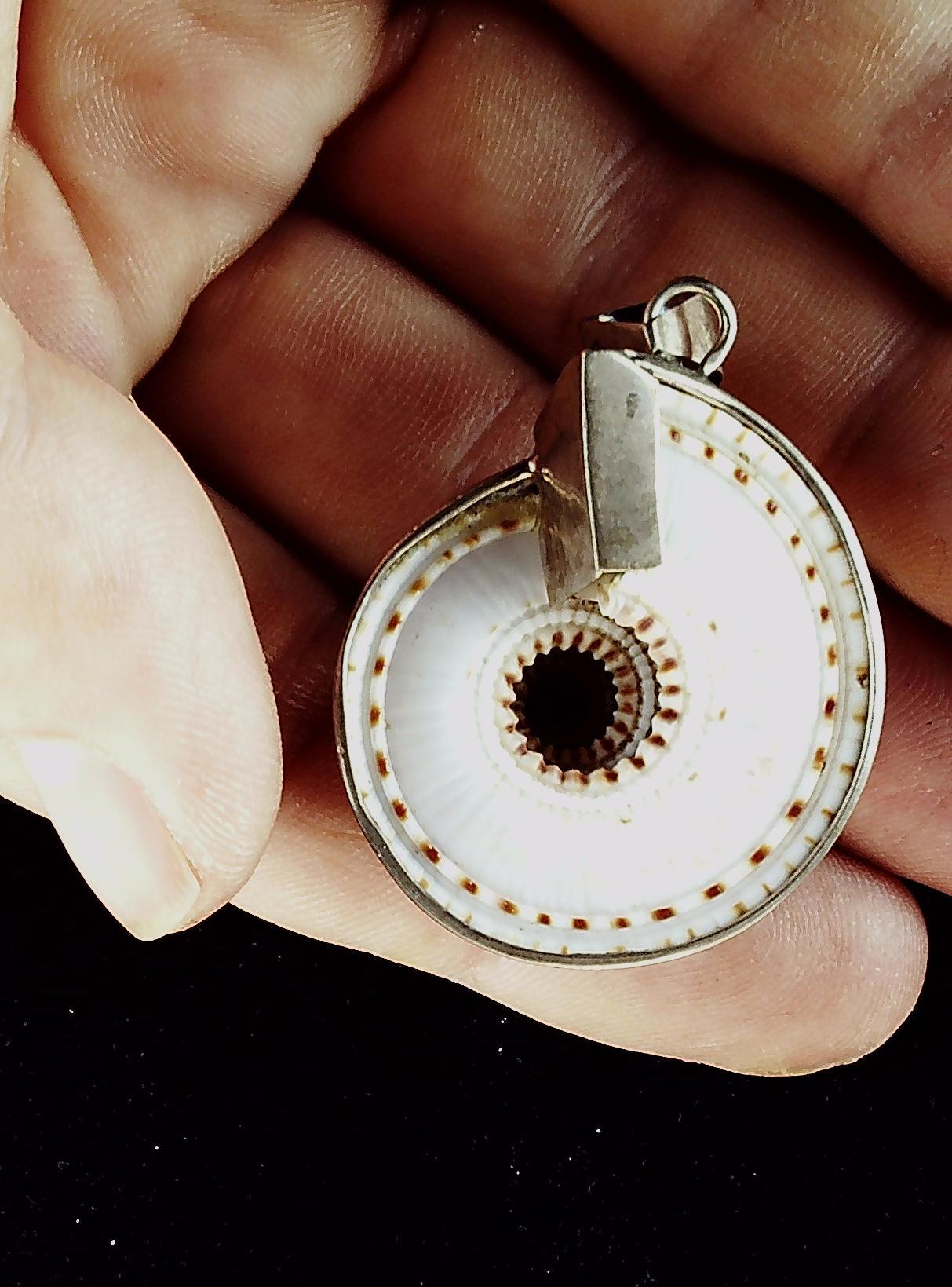 Shell  with sterling silver bezel. Pendant 3D shell 30mm round