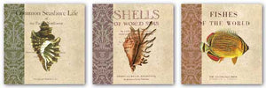 Seashore Life, Shells and Fishes of the World Set by Paula Scaletta