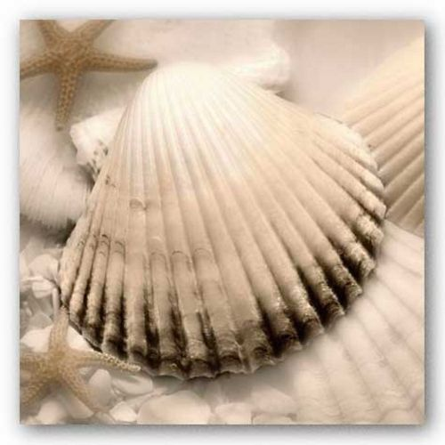 Iridescent Seashell II by Donna Geissler