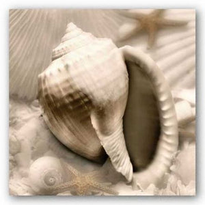 Iridescent Seashell III by Donna Geissler