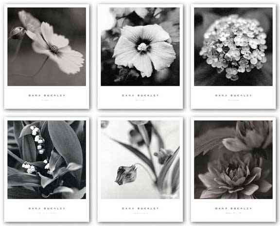 Cosmos I, Hibiscus, Hydrangea, Lily of the Valley, Sandersonia I, and Water Lily II Set by Dana Buckley