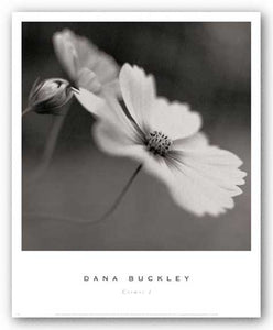 Cosmos I by Dana Buckley