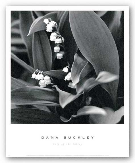 Lily of the Valley by Dana Buckley