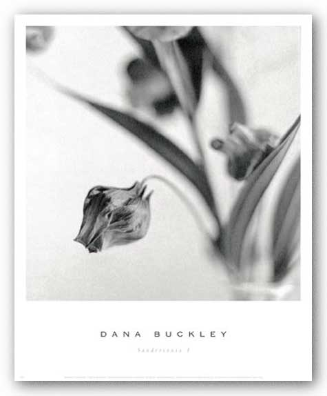 Sandersonia I by Dana Buckley